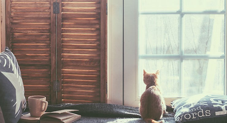 7 Must Read Young Adult Books for Cat Lovers